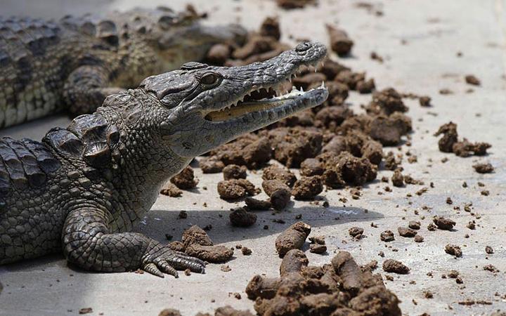 Crocodile-Padenga
