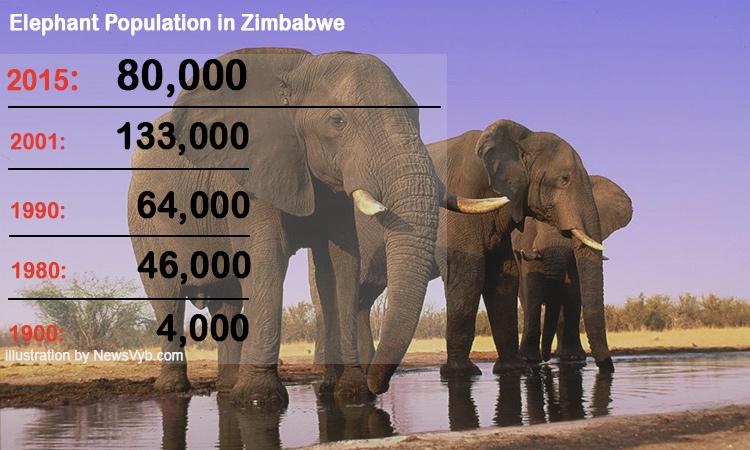 eephant-population-in-Zimbabwe
